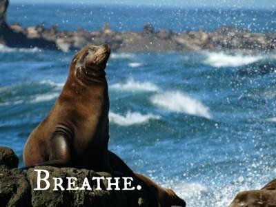 Breathe WFTD