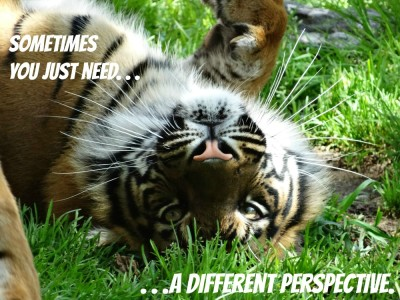 perspective tiger WFTD