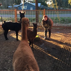 Lessons for Your Writing Journey from Alpacas